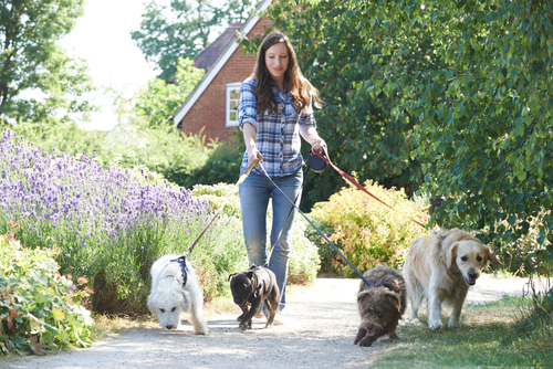 Profesional Dog Walking Services For On Deman Apartment Amenities Blog